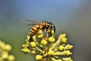 A wasp on a plant